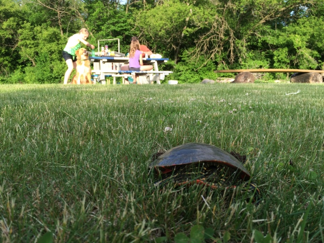Turtle watch 2015 (2)